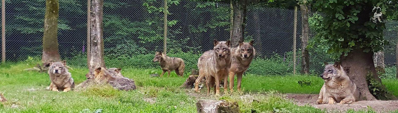 Parc animalier Montaigu la Brisette